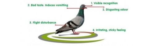 Anti pigeons